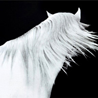 White Horse with Flowing Mane